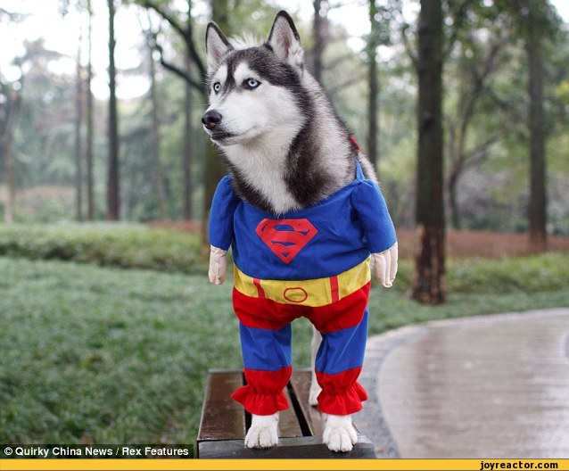 husky,superman,continued in comments,sandbox,just fun