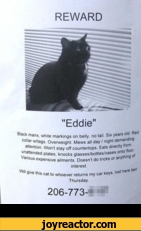 """REWARD""""Eddie""""B/ack ft^dn<>113, whl,e markings on belly, no tail Six years old Red aUent oa9SvverNve9ht Mews all day / night demanding attended VVn *$,ay off coun,ertPs Ea,s directly from Wnous e* p,a!es- kn<>cks glasses/bottles/vases onto toor * Pensive ailments. Doesnt do tricks or anything of"""