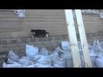 / Funny cats,Animals,,      .