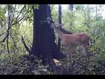 Deer Fart.wmv,Animals,,Deer Fart