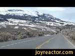20.03.2014 Yellowstone Bison Running for their lives    ,Comedy,,