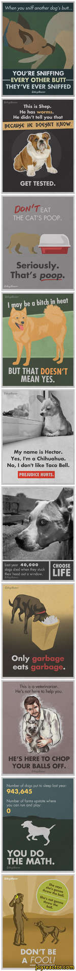 YOU'RE SNIFFING EVERY OTHER BUTT THEY'VE EVER SNIFFEDGoUegdhSeriously. That's poop.My name is Hector. Yes, I'm a Chihuahua. No, I don't like Taco Bell.PREJUDICE HURTS.Last year 40,000 dogs died when they stuck their head out a window.GdkfdfumonGoUegdhmonHE'S HERE TO CHOP YOUR BALLS OFF.Number of