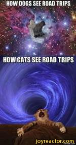 HOW DOGS SEE ROAD TRIPS *J t ' # HOW CATS SEE ROAD TRIPSVIA9GAG.COM