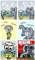 You remembered my birthday!An elephant never forgets.^ahahahIt's your mother's teeth.llllCOMICS.me