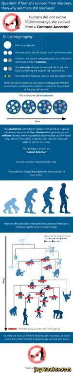 Question: If humans evolved from monkeys, then why are there still monkeys?Humans did not evolve FROM monkeys. We evolved from a Common Ancestor.In the beginnging:This is a single cellAt some point, the cell copied itself to form two cells.However, the second cell (grey) came out different in some