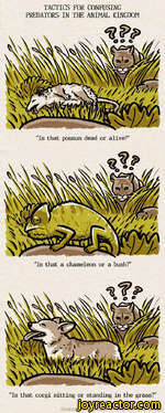 """TACTICS FOR CONFUSING PREDATORS IN THE ANIMAL KINGDOM""""Is that possum dead or alive?""""""""Is that corgi sitting or standing in the grass?""""""""Is that a chameleon or a bush?"""""""