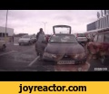 Fight drivers in Kharkov, ,Entertainment,animals,fun,,fight,,cats,,,dogs,