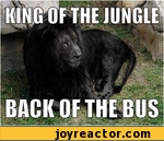 king of the jungle back of the bus