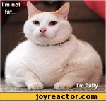 I'm not fat, I'm fluffy