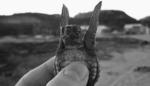 little tortoise flies