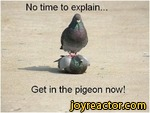 No time to explain.Get in the pigeon now!