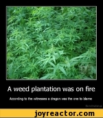 A weed plantation was on fireAccording to the witnesses a dragon was the one to blameDe motivation, us