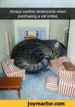 Always confirm dimensions when purchasing a cat online.