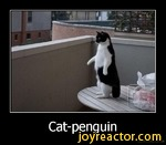 Cat-penguinDe motivat ion. us