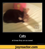 Catsat times they are so sweetDe motivation, us