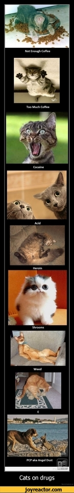 Cats on drugsDe motivation.us