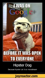 Hipster DogBecause hipster cat it so mainstreamDe motivation, us
