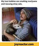 My two hobbies are smoking marijuana and rescuing stray cats.