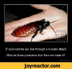 If cockroaches can live through a nuclear attack What are those protections from them are made of?Demotivation.