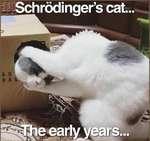 Schrdinger s cat...