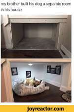 my brother built his dog a separate room in his house