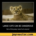 LARGE CATS CAN BE DANGEROUSBut a little pussy never hurt anyone!Demotivation.