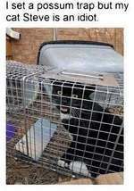 I set a possum trap but my cat Steve is an idiot.