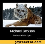 Michael Jackson has inspired also tigers.