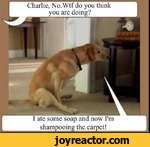 Charlie, No.Wtf do you think you are doing?I ate some soap and now I'mshampooing the carpet!