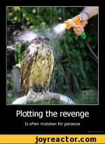 Plotting the revenge Is often mistaken for patience