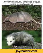 If you think about it, armadillos are just tactical assault possums.