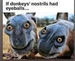 If donkeys' nostrils had eyeballs...