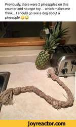 Previously, there were 2 pineapples on this counter and no rope toy.... which makes me think... I should go see a dog about a pineapple - y