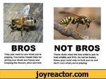 BROSThey just want to see what you're playing. You better thank them for giving your dumb ass honey and keeping the flowers alive and shit.NOT BROSThese dicks wear the bee uniform just to troll wildlife and YOU. Do not be fooled, these guys exist only to fuck you up and don't care what you're