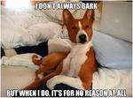 I don't always bark, but when i do, it's for no reason at all