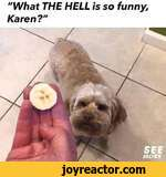 """""""What THE HELL is so funny, Karen?"""""""