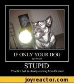 IF ONLY YOUR DOG Spat fire balls STUPID That fire ball is clearly coming from Einstein.