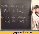 When in doubt, hug a dog, when in armor, hug a cat