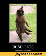 Irish cats step-dancing techniques