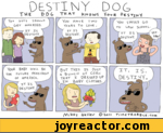 Destuny dog, the dog that knows your destiny
