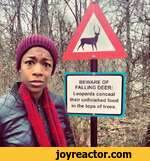 BEWARE OF FALLING DEER:Leopards concealtheir unfinished foodin the tops of trees.  H V**' AAtx33f*' // K  SSab \fVKt'. J1 A P m f \. 4 1r'1 ^liWi\W'K \ M/WL / /v 4> 1 i*- *W  / * F/IKBI * * * *  1 j.V ,Ai ily/fL7 * .'*]  1 ij