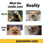Big dogSmalldogWhat the..media sees Reality