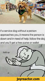 if a service dog without a person approaches you, it means the person is down and in need of help, follow the dog