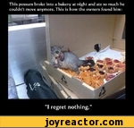 """this possum broke into a bakery at night and ate so much h uldn't move anymore. This is how the owners found him: """"I regret nothing."""""""