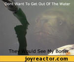 dont want to get out of the water they would see my boner