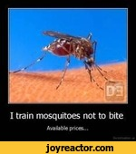 I train mosquitoes not to biteAvailable prices...
