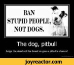 BAN STUPII) PEOPLE NOT I)()(iS.The dog, pitbullJudge the deed not the treed so gr*e a ptbull a chance^