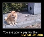 You are gonna pay for this!!!