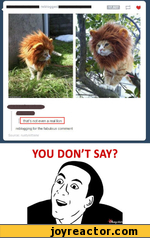 that's not even a real lion