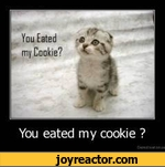 You eated my cookie ?